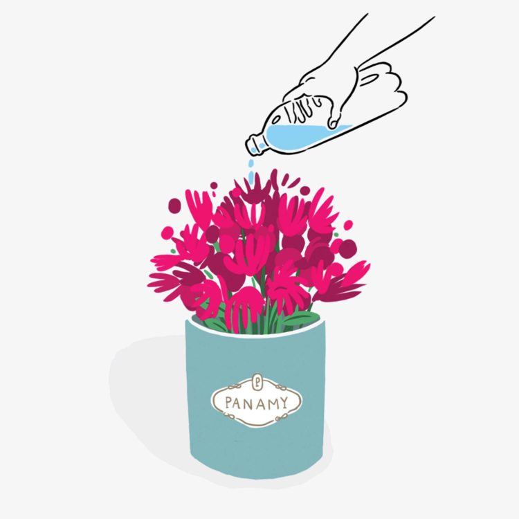Flower Care - The PANAMY Flowerbox - Flower delivery Switzerland